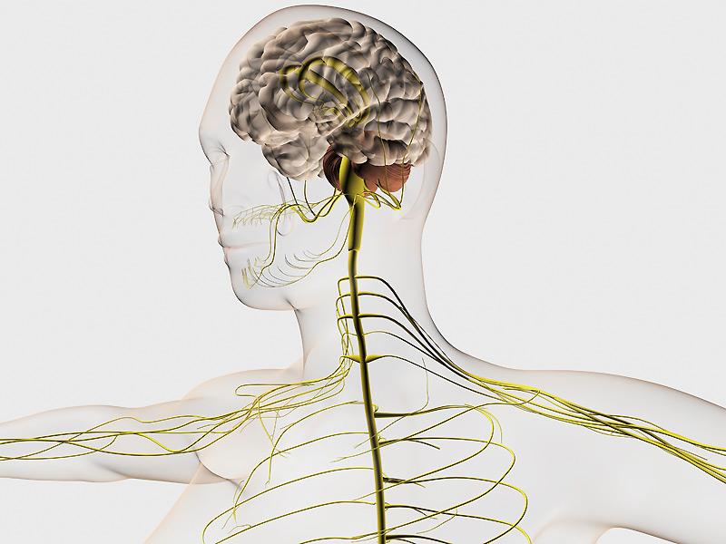 Кинезиологический тест - мышечная диагностика, метод акупунктуры.